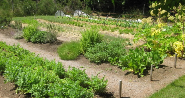 permaculture cropped