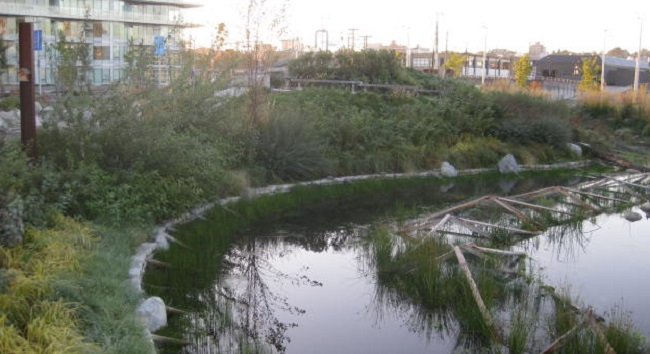 stormwater pond cropped